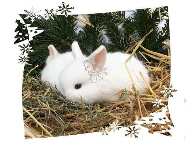 Conejos enanos - 2/2